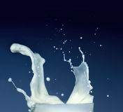 Splash of milk Royalty Free Stock Photo