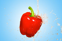 Splash with red pepper on blue background Royalty Free Stock Image