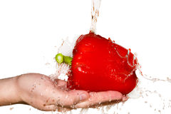 Splash with red pepper lying in hand Stock Images