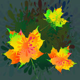 Splash,Rose & Butterly-vector Royalty Free Stock Images