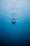 Splash water on blue surface of river Royalty Free Stock Images