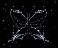 Splash Of Water Butterfly. Water splashes and drops shaped as butterfly, black background isolated stock photo