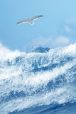 Splash of water with seagull Stock Image