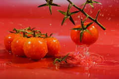 Splash of water treatment for tomatoes Stock Photography