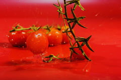 Splash of water treatment for tomatoes Royalty Free Stock Images