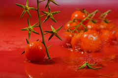 Splash of water treatment for tomatoes Stock Photos