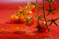 Splash of water treatment for tomatoes Stock Photo