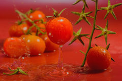 Splash of water treatment for tomatoes Royalty Free Stock Image