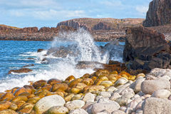 Splash in a wave. Barents Sea Stock Photography