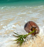 Splashed Coral Beach Coconut SE Asia Stock Photo