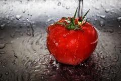 Splashed tomato Royalty Free Stock Photos