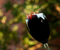 Splashes of red wine Royalty Free Stock Photos