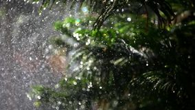 Splashes water on bokeh background fir-tree. Shift. Shift in focus from near to far distances and back with professional lens stock video footage