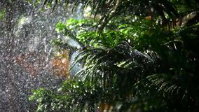 Splashes water on bokeh background fir-tree. Shift. Shift in focus from near to far distances and back with professional lens stock video
