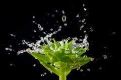 Splashin water drops on green plant Stock Photo