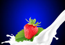Splashing milk with strawberry Stock Photography