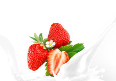 Splashing milk with strawberry Royalty Free Stock Image