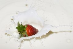 Splashing strawberry into a milk Royalty Free Stock Image