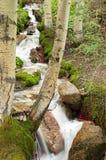 Splashing Stream Royalty Free Stock Image