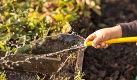Splashing water from a hose in the garden.  royalty free stock images