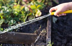 Splashing water from a hose in the garden.  royalty free stock photo