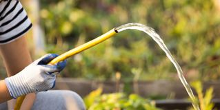 Splashing water from a hose in the garden.  stock photography