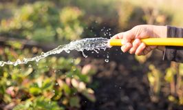 Splashing water from a hose in the garden.  stock images