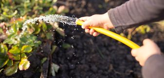 Splashing water from a hose in the garden.  royalty free stock image