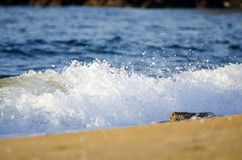 Splashing wave while hitting the rock at the beach Stock Photography