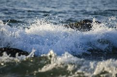 Splashing wave while hitting the rock at the beach Stock Images