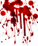 Splattered blood stains on white background. Close-up royalty free stock photography