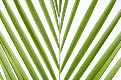 Splayed palm leaves Royalty Free Stock Images