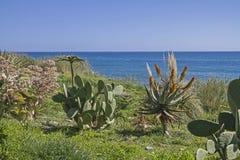 Splebdor dei cactus in Liguria Fotografia Stock
