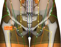 Acupuncture Point SP12 Chongmen, 3D Illustration Stock Image