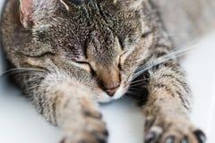 Spleeping, ausgedehnte Katze stockbild