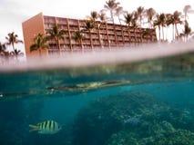 Spleet onder over waterfoto van tropische vissen voor hotel Stock Afbeeldingen