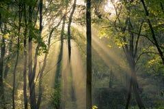 Splendendo attraverso gli alberi Immagine Stock