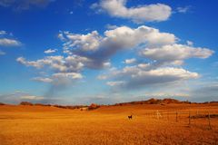 Splendid. There is grassland in bashong Stock Photo