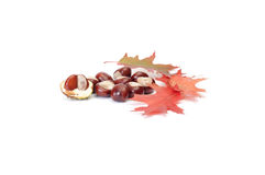 Splendid autumn chestnuts and leaves. Stock Image