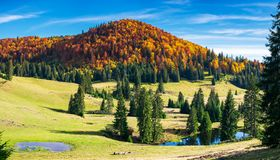 Splendid autumn landscape on a bright day. Spruce trees on hill around the pond. forest in colorful foliage on a distant mountain royalty free stock photography
