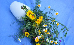 Splendid bouquet of wildflowers Stock Photography