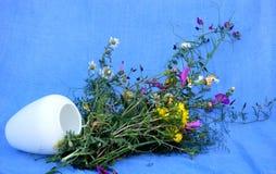 Splendid bouquet of wildflowers. On blue background Stock Photos