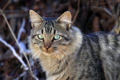 Splendid cat Stock Images