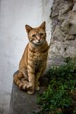 A Splendid cat staring in Paris stock image