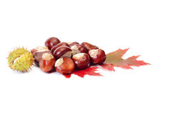 Splendid chestnuts and leaf on a white. Stock Photos