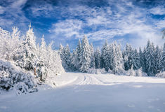 Free Splendid Christmas Scene In The Mountain Forest At Sunny Day Stock Images - 95203534