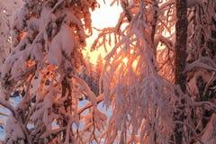 Splendid Christmas scene in the mountain forest. Colorful winter sunrise Stock Image