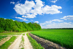 Splendid cumulus clouds  and spring field. Stock Image