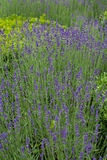 Splendid, decorative gardens Stock Photo