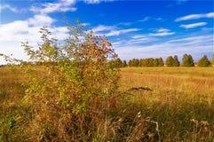 Splendid ;dogrose by autumn. Royalty Free Stock Image